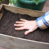 3.  Spread compost to level
