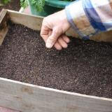 4.  Sprinkle seeds across surface. Add a little more compost.