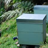 Hives with brood box and upper honey 'super'