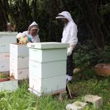 Hives with two brood boxes