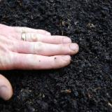 Gently pat soil with hands