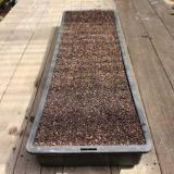 Place tray on a level surface, fill with dry seed-raising mix. Give tray a gentle tap on the side to settle compost.