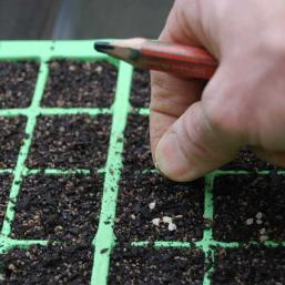 Fill a cell container with seed raising mix and place 1-2 seeds in each cell. Fill a cell container with seed sowing mix and place 1-2 seeds in each cell.