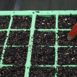 Gently push the seeds beneath the mix with a pencil, water and place lid on tray and leave in warm and light place for germination to occur.