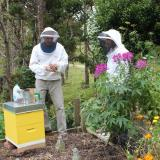 Enlist the help of another bee-keeper if you can