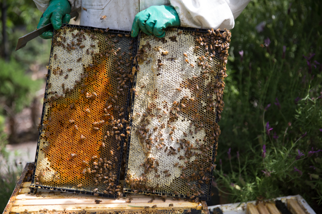 honey bee diseases and pests a practical guide