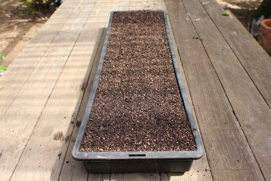 Merveilleux Sowing Seed In Trays
