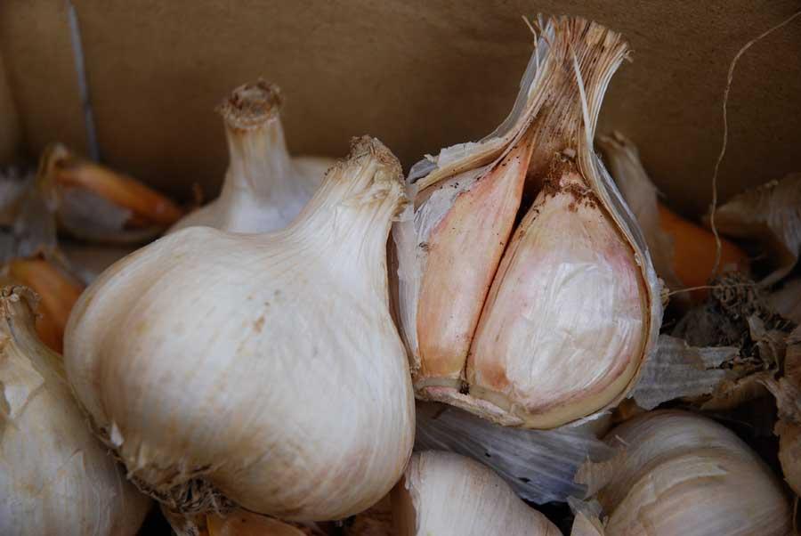 Garlic Spray Pod Easy Edible Gardening