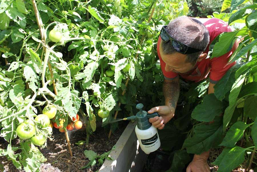 Neem Oil Spray - POD easy edible gardening