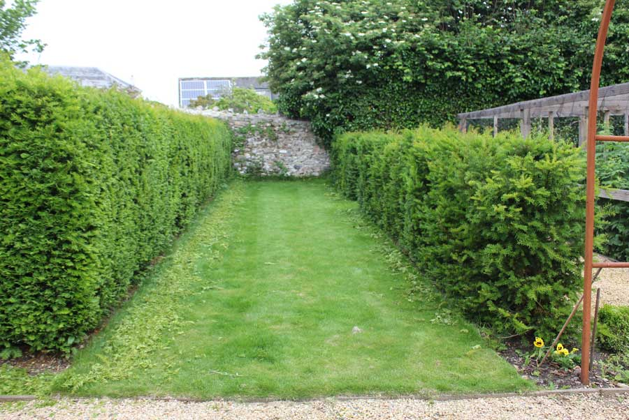 Image Result For How To Start A Garden Hedge