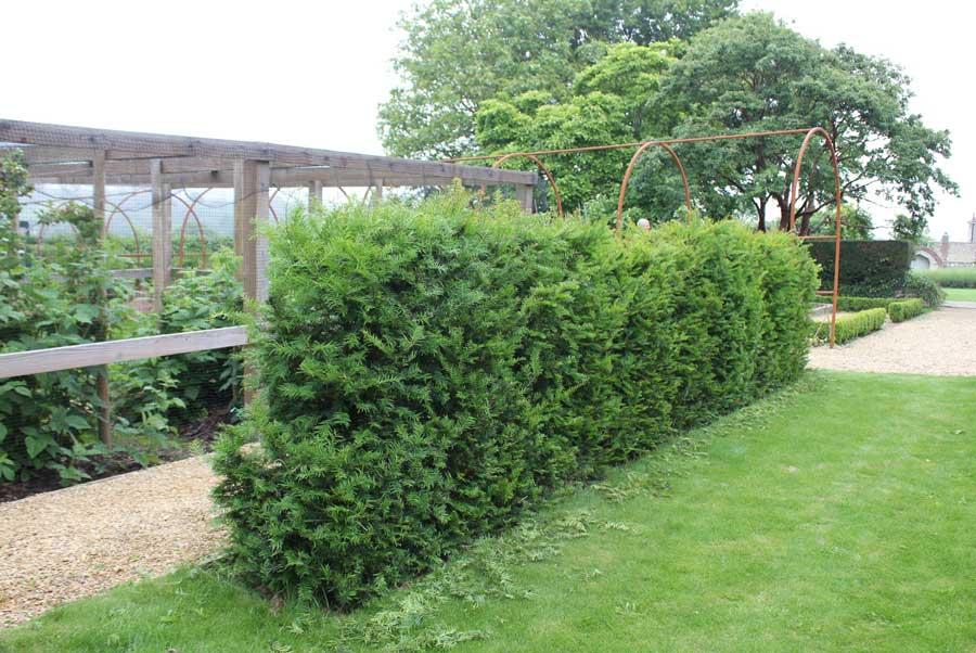Screens Fences Trellis Walls Hedges Pod Easy Edible