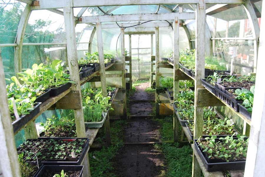 Greenhouses Pod Easy Edible Gardening