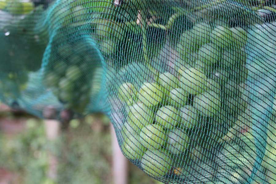 Plant Protection Pod Easy Edible Gardening