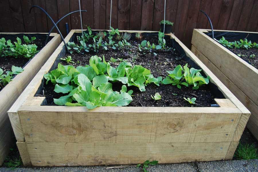 Raised Beds - POD easy edible gardening