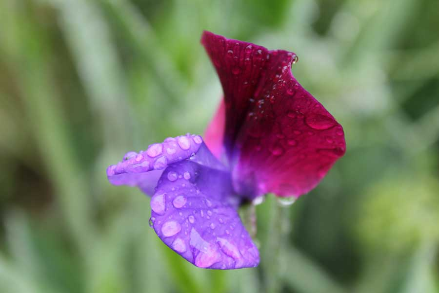 Image Result For How To Start A Garden With Seeds