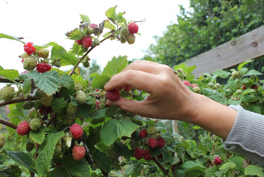 Raspberry Pod Easy Edible Gardening