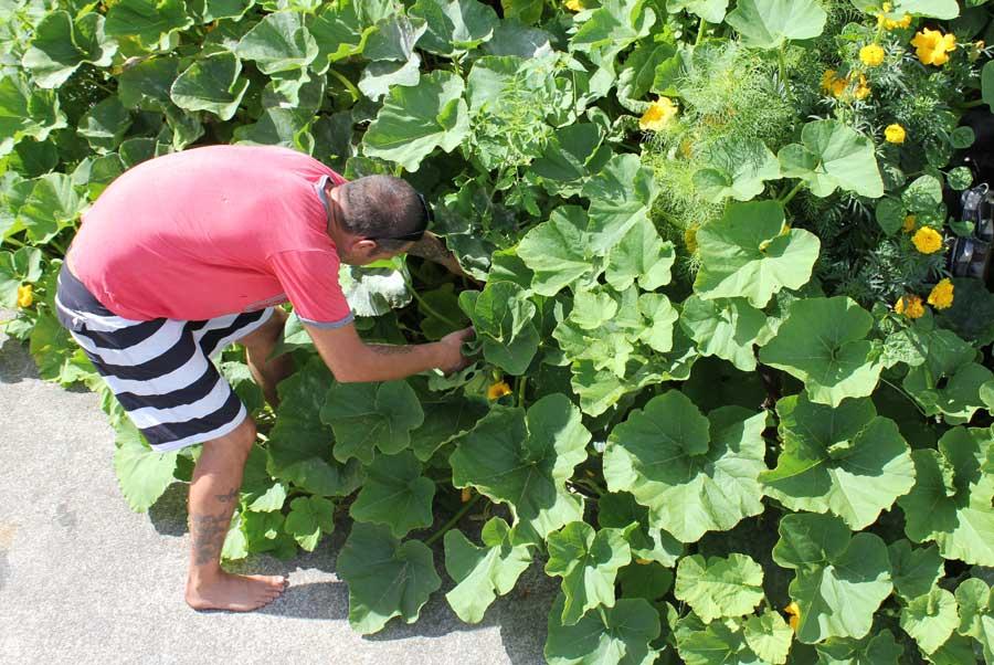 Pumpkin Amp Squash Pod Easy Edible Gardening